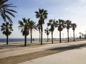 The beaches in Barcelona palm trees