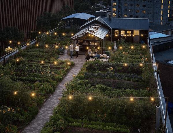 Rooftop garden restaurant Østergro in Copenhagen